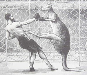 "Kangaroos are generally gentle animals, but males sometimes fight each other for ""mating rights"" over the finicky female kangaroos. In heightened cases like ..."